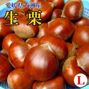 【愛媛県大洲産】生栗(Lサイズ前後-多少ばらつきあり)1kg