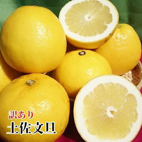 【送料無料】訳あり 土佐文旦 約 9kg 【高知県産】