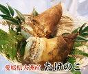 【送料別】愛媛県大洲市産 旬を先取り!朝採れたけのこ 2kg(2〜4本(目安)入り)[米ぬか付き・筍・竹の子]