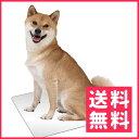 マルカン ひんやりクールアルミプレート 犬用 2L【送料無料】
