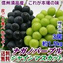 【予約】【クール送料無料】これが本場の味!長野県須高産!ナガノパープル!緑のシャインマスカット!詰合せ!種無しで皮ごと食べられるぶどう×3房(約1.5kg)!