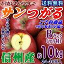 【予約】【クール送料無料】長野県産 サンつがる Bランク(マル特)約10kg(24-36玉)秋のりんごシーズン最初の品種!信州りんごは甘〜いよ♪