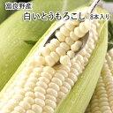 北海道富良野産 白いとうもろこし♪一度食べたらクセになるぅ!L〜2L混サイズ皮付き8本入!まるで果物みたいなフルー…