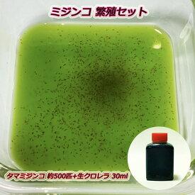【安心のクール便】ミジンコ繁殖セット(タマミジンコ) 約500匹(約0.5g)+スーパー生クロレラ 30ml+繁殖方法説明書付き
