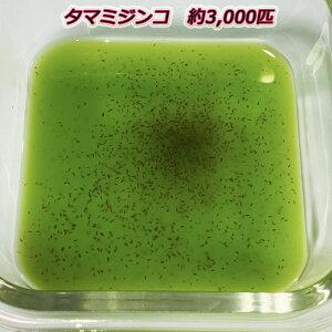 ミジンコ【タマミジンコ】約3,000匹〜(1g)