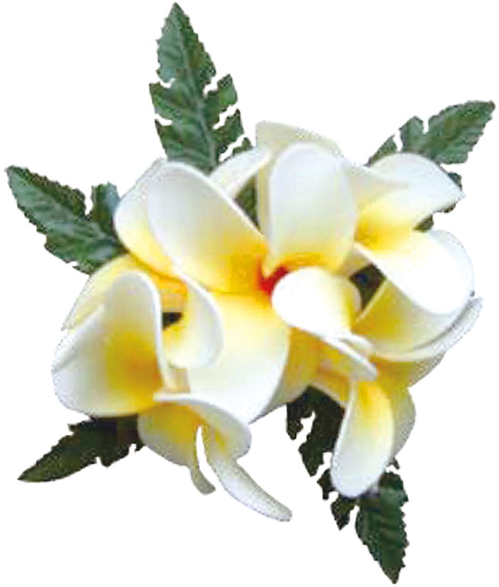 フラダンス衣装 髪飾り 花飾り プルメリア ヘアクリップ レイ イベント フラ CL-56 コロヘ5フラワーズプルメリアクリップ       ホワイト 白