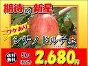須坂市 山吉果樹園 ワケあり「シナノドルチェ」5kg