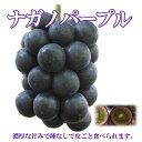 須坂市 山吉果樹園 極上ブドウ ナガノパープル