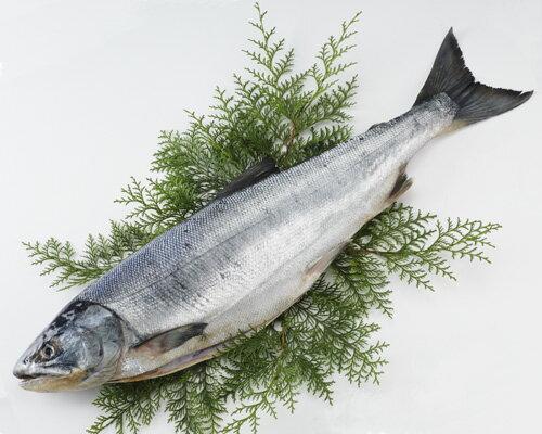 【送料無料】[北海道産]天然新巻鮭【秋鮭】(中辛・約2.5kg)【smtb-k】【w1】【楽ギフ_のし】