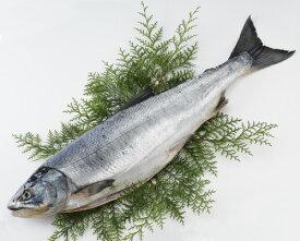 【送料無料】[北海道産]天然新巻鮭【秋鮭】(中辛・約2.0kg)
