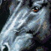 "RIOLIS十字花刺綉刺綉配套元件No.1494""Breeze Through Mane""(馬)俄羅斯的刺綉廠商""裏約熱內盧鬆鼠""shisyu配套元件"