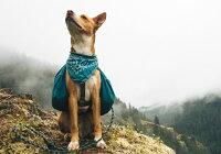 【小型犬 中型犬 外れ防止リード】クライミングロープリード ロック式 長さ1.5m Small カラビナ ワイルダードッグ