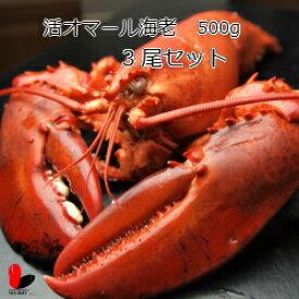 【活】活オマール海老 500g 3尾セット