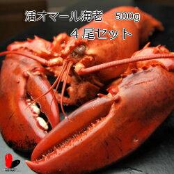 【活】活オマール海老 500g 4尾セット