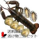 【活】【送料無料】活け物三点セット【オマール海老/あわび/ホンビノス貝】のセット