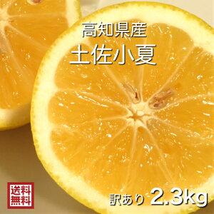 【送料無料】【糖度13度以上】【訳あり】【高知県産】【産地直送】【小夏】土佐小夏 2.3kg