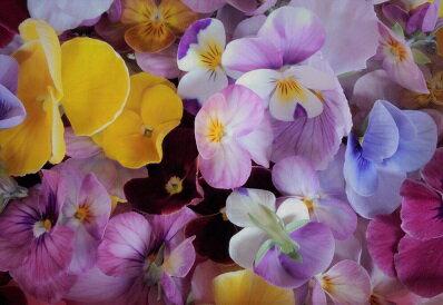どんなお料理にも華を添える食用花