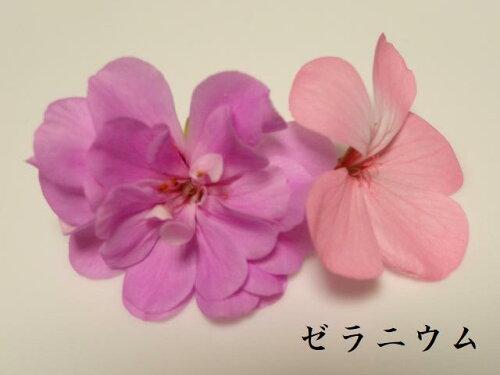 エディブルフラワー(ピンク系)食用花】【日時指定可(お急ぎの方は最短希望と備考欄にお書き下さい)】