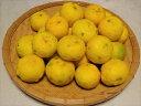 【12月15日お届け分にて終了です】【配送は日本郵便のみになります】【種無しゆず玉】20個(1.2キロ程度) とっても低農薬栽培なので、ブサカワ(ブサイクな皮)な分、たっぷりお使いいただけます💛