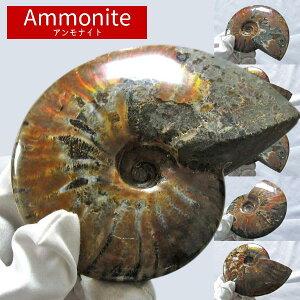 アンモナイト 化石 原石 虹入り|アンモン貝 Ammonite 選べる アンモライト fossil 置物 フォッシル 菊石 台座付属