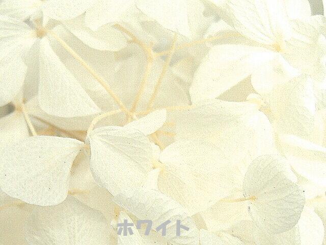 ★アジサイ:各色★ あじさい ハーバリウム 花材 プリザーブドフラワー ブリザーブドフラワー ブリザーブフラワー ブリザード