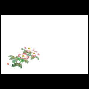 尺3雲竜和紙マット 花水木 192-10048(Z117-412)テーブルマット ランチョンマット 紙 紙製 ペーパー 業務用 和食