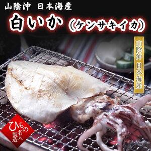 白いか(ケンサキイカ)150g 干物(単品) 山陰沖日本海産(鳥取県・島根県産)
