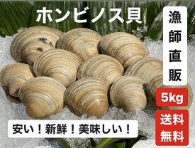 5kg【送料無料】漁師直送!だから新鮮!どこよりも安い!千葉県産 活ホンビノス貝  ふっくらと肉厚でおいしいダシがたっぷり!バーベキューに!酒蒸しに!