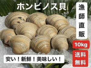 10kg【送料無料】漁師直送!だから新鮮!どこよりも安い!千葉県産 活ホンビノス貝  ふっくらと肉厚でおいしいダシがたっぷり!バーベキューに!酒蒸しに!