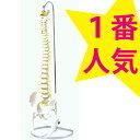 【SALE】 可動型脊柱模型 大腿骨付きモデル IK41 【送料無料】 トワテック