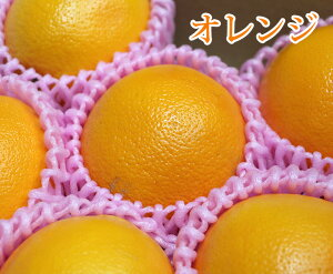 アメリカ産 オレンジ【8個】【 アメリカ オレンジ 柑橘 家庭用 贈り物 贈答 お祝い お返し ギフト プレゼント 父の日 母の日 】