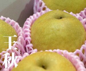 【送料無料】鳥取県産 王秋 【2kg 5個入】【定番 梨 鳥取県 秋 家庭用 贈り物 贈答 お祝い お返し 5L 大きい ギフト みずみずしい プレゼント フルーツ お取り寄せ うまい 果物】