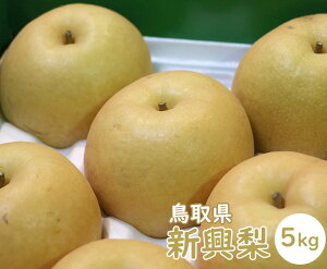 【送料無料】鳥取県産 新興梨(しんこうなし)【5kg】【 なし ナシ JA鳥取いなば 梨 旬 うまい お取り寄せ 贈答用 贈り物 ギフト 進物 フルーツ お取り寄せ うまい 果物】