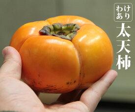 【訳あり】愛媛県産 太天柿 6kg【太天柿 柿 愛媛県 家庭用 】