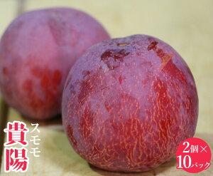 【送料無料】福岡県産 貴陽【10パック(2個入)】【福岡県産 すもも 家庭用 贈り物 贈答 お祝い お返し フルーツギフト プレゼント フルーツ お取り寄せ うまい 果物】