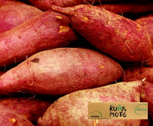 【送料無料】熊本県産 さつまいも べにはるか【約5kg】【熊本県産 家庭用 贈り物 贈答 お祝い お返し 芋 いも イモ 野菜 お歳暮 フルーツ お取り寄せ うまい 果物】