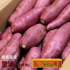 【徳島県産】里浦(里むすめ)【約5kg】【徳島県産 家庭用 贈り物 贈答 お祝い お返し  芋 いも イモ 野菜 お歳暮】