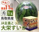 【国産】鳥取県産 大栄すいか【特大 1玉】【鳥取県産 JA全農とっとり 大玉 スイカ すいか 家庭用 贈り物 贈答 お祝い…
