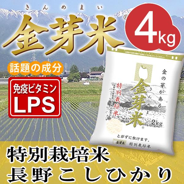 【29年産】特別栽培米4kg【2kg×2袋・送料込】※無洗米・LPS(リポポリサッカライド)が豊富で免疫力アップ(きんめまい・お米)