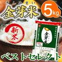 【29年産・新米】金芽米 ベストセレクト5kg【送料込】※無洗米・LPS(リポポリサッカライド)が豊富で免疫力アップ(…