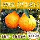 【送料無料】不知火(デコポン)【約5キロ】