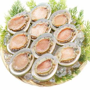 送料無料 あわび Lサイズ 1kg 1箱12個入り 殻つきお刺身用アワビ 高級料亭でも使用する新鮮な殻付きあわび 【あわび アワビ 鮑 お造り バター焼き ステーキ おせち 翡翠の瞳 貝柱 豊洲 寿司 海
