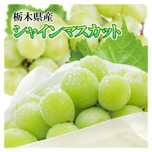 栃木産 シャインマスカット3パック シャイン マスカット たねなしぶどう 種なしシャインマスカット 種なしぶどう たねなしぶどう 種なしマスカット