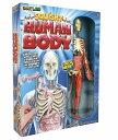 人体模型 おもちゃ 心臓 骨 サイエンス 知育玩具 子供向け 分解  勉強 実験 研究 【送料無料】