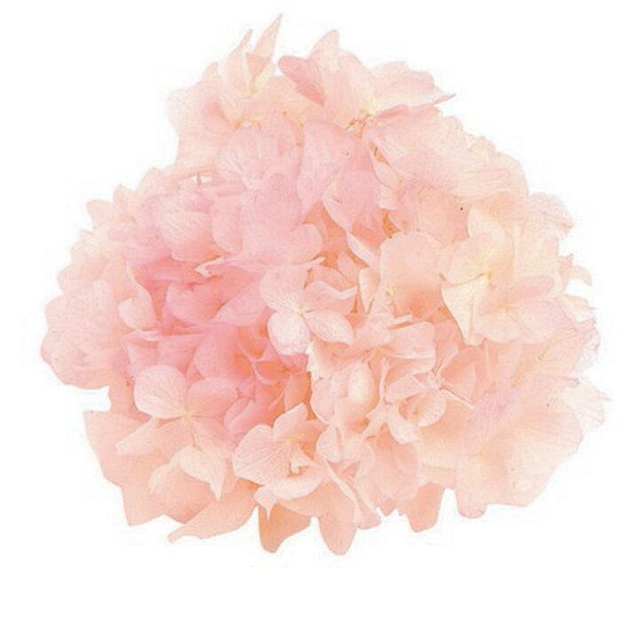 【プリザーブドフラワー】東北花材/ソフトあじさい彩/ホワイト×ピンク/約2.5輪