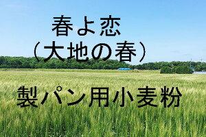 大地の春 春よ恋 25kg 北海道産小麦として高い評価を受けている「春よ恋」を100%使用した強力小麦粉です。強力粉。春よ恋独特のもっちりした食感と濃厚な風味。中華麺にもOK。硬さと弾