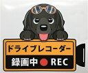 犬 ブラックラブ ドライブレコーダー録画中 犬種 外張りステッカー ラブラドールレトリーバー ブラック ドラレコ ス…