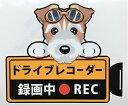 犬 ワイヤーフォックステリア ドライブレコーダー録画中 犬種 外張りステッカー ドラレコ ステッカー ドッグ いぬ 車 …