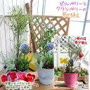 【母の日寄せ植え】ビルベリーとクランベリーの寄せ植え ( アートストーン22cm鉢植え )【 送料無料 】<早期予約特典!! ポイント10倍…