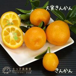 大実金柑(きんかん)